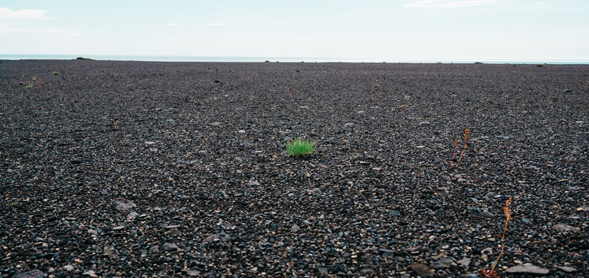 Grasbüschel wächst aus Asphalt
