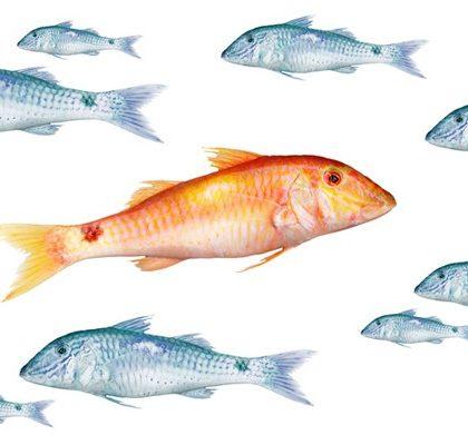 Illustration von Fischen