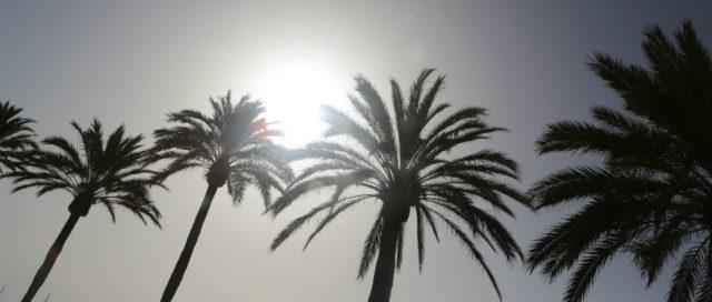Palmen vor Himmel