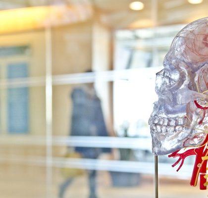 durchsichtiger Skelett-Kopf