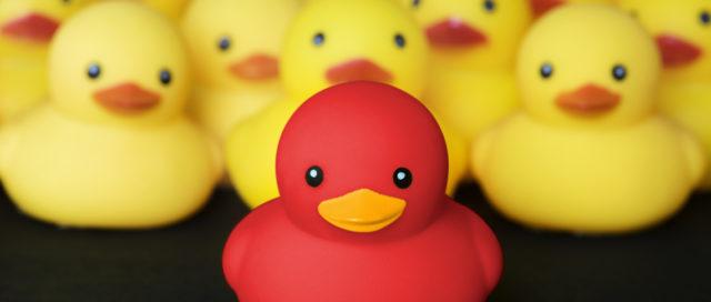 1 rote Ente unter gelben Enten
