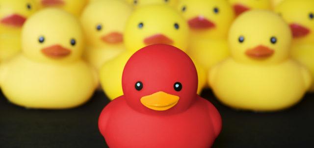 1 rote Ente zwischen vielen gelben Enten